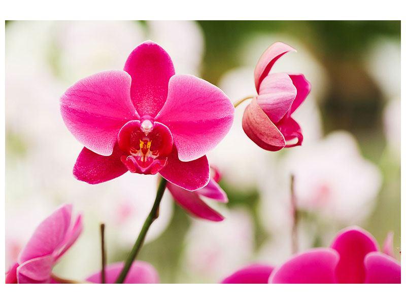 Metallic-Bild Perspektivische Orchideen