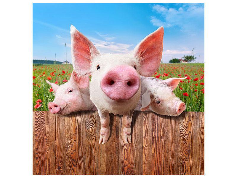 Metallic-Bild Schweinchen im Glück