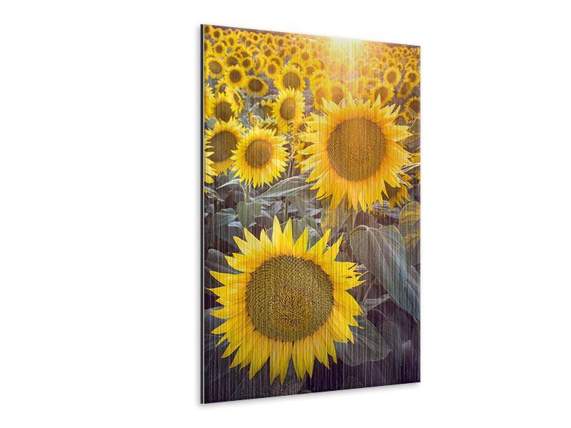 Metallic-Bild Die Sonnenblumenperspektive