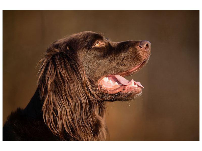 Metallic-Bild Der Jagdhund im Profil