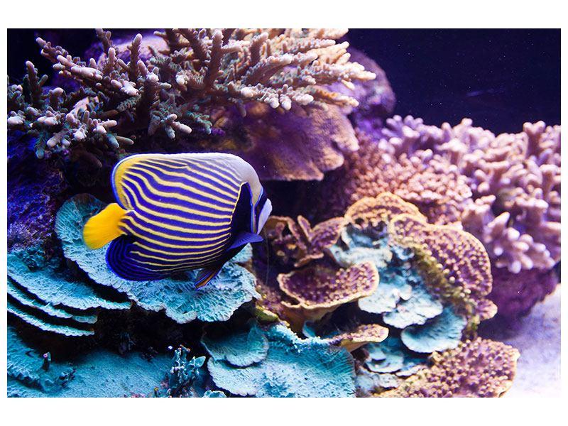 Metallic-Bild Faszination Unterwasser