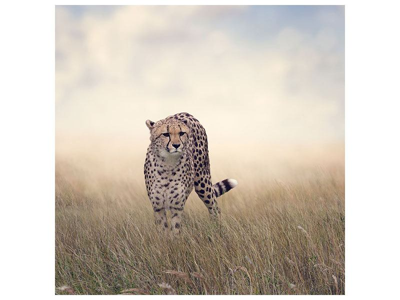 Metallic-Bild Der Gepard