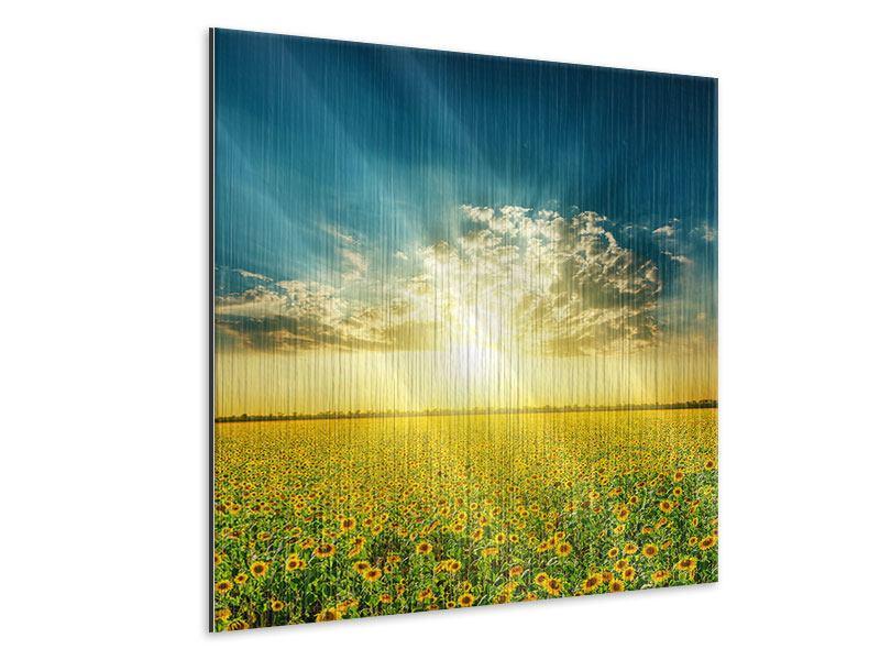 Metallic-Bild Sonnenblumen in der Abendsonne