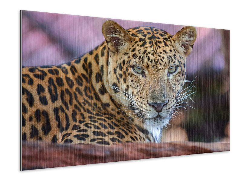 Metallic-Bild Leopard