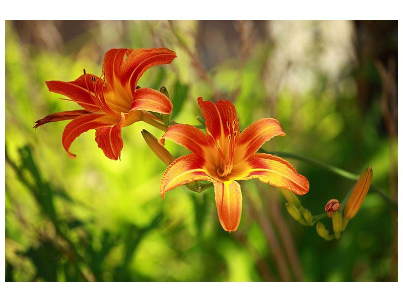 Metallic-Bild Lilien in der Natur