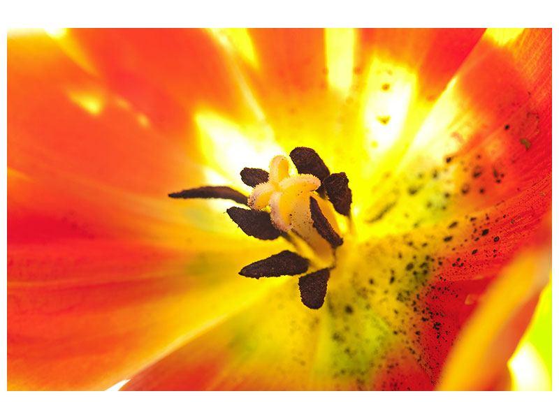 Metallic-Bild Die Narbe einer Tulpe XXL