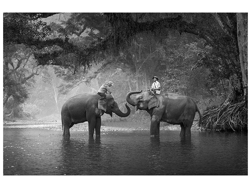 Metallic-Bild Zwei Elefanten