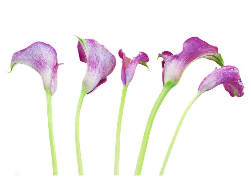 Metallic-Bild Callas in Lila