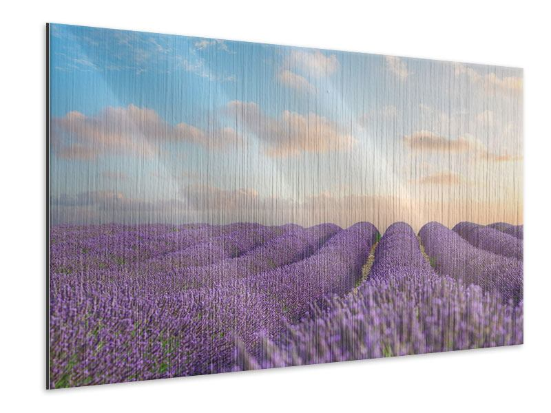 Metallic-Bild Das blühende Lavendelfeld
