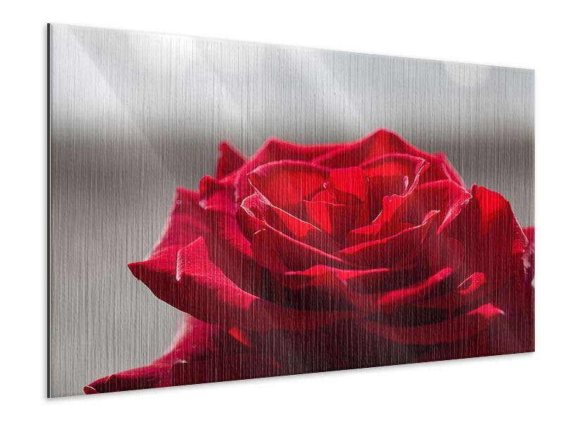 Metallic-Bild Rote Rosenblüte