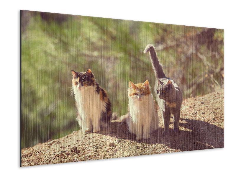 Metallic-Bild Katzen im Garten