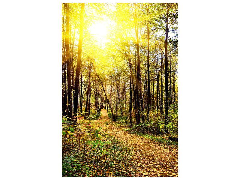 Metallic-Bild Waldspaziergang in der Herbstsonne