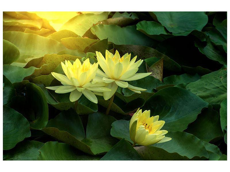Metallic-Bild Wilde Lotus