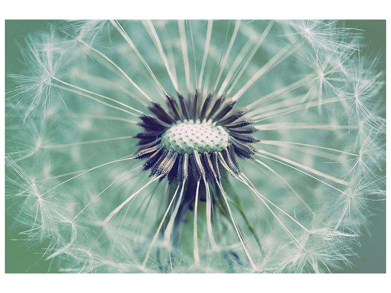 Metallic-Bild Close Up Pusteblume