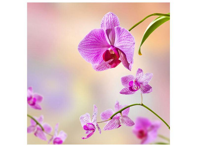 Metallic-Bild Romantische Orchideen