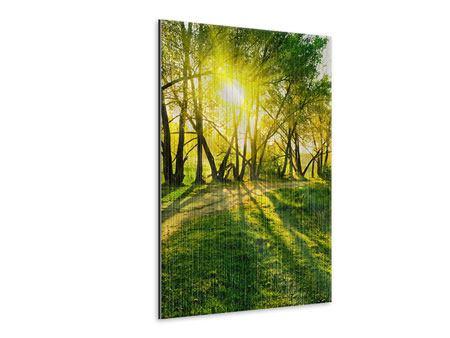 Metallic-Bild Waldweg im Sonnenlicht