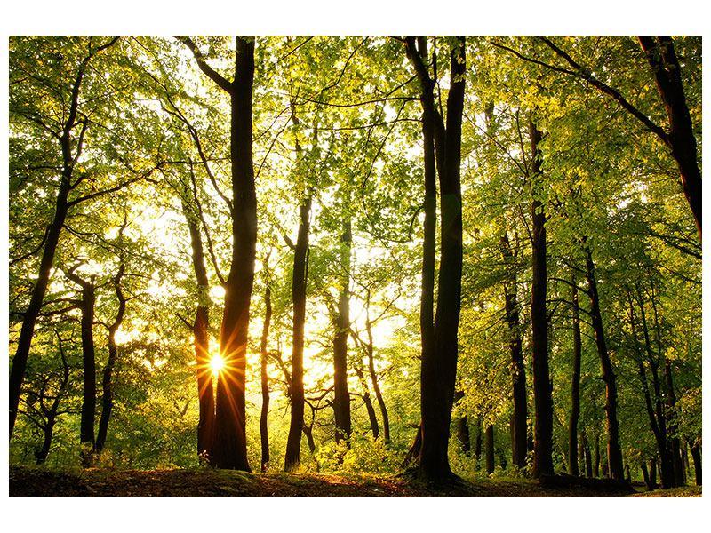 Metallic-Bild Sonnenuntergang zwischen den Bäumen