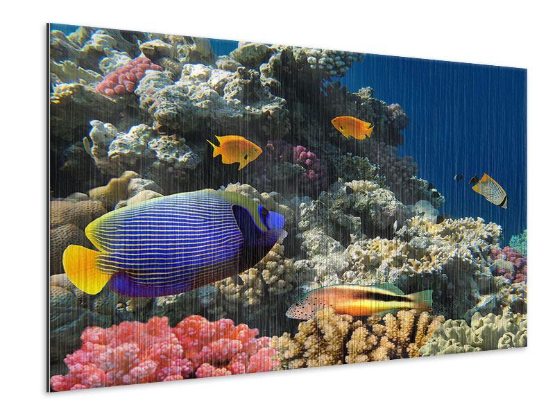 Metallic-Bild Das Aquarium