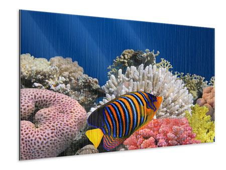 Metallic-Bild Mit den Fischen tauchen