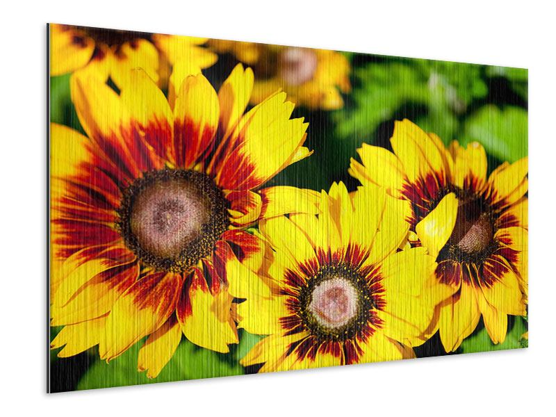 Metallic-Bild Reife Sonnenblumen
