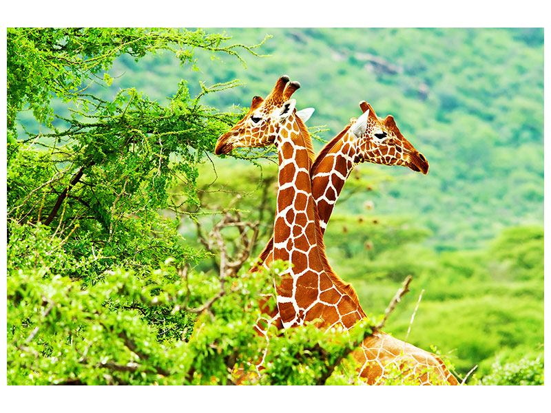 Metallic-Bild Giraffenliebe