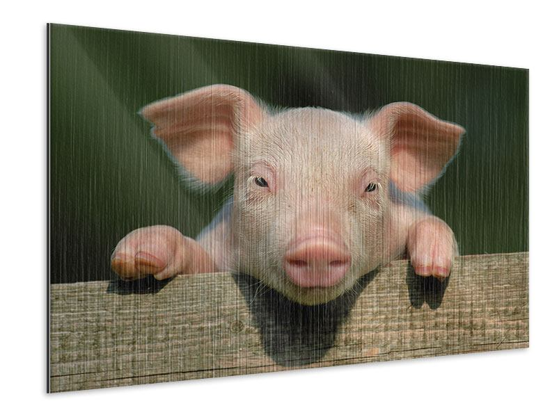 Metallic-Bild Schweinchen Namens Babe