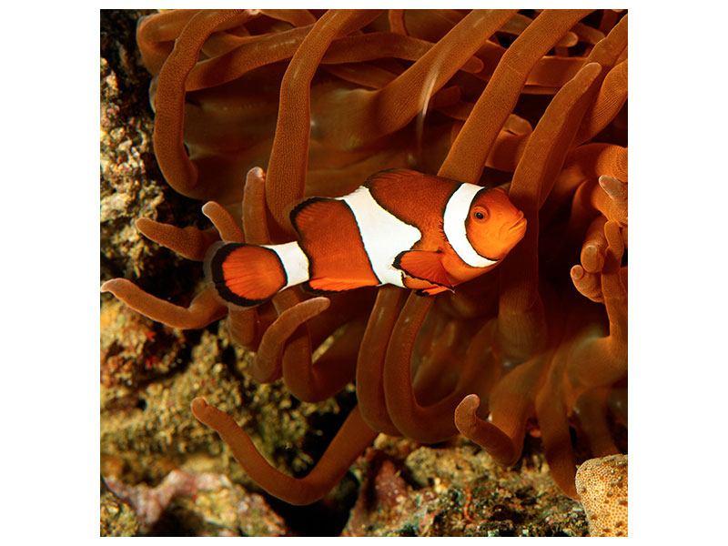 Metallic-Bild Nemo