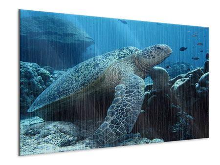 Metallic-Bild Die Meeresschildkröte