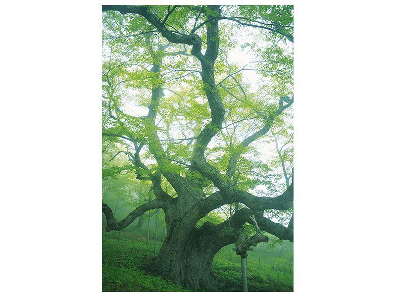 Metallic-Bild Der alte Baum