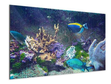 Metallic-Bild Fische