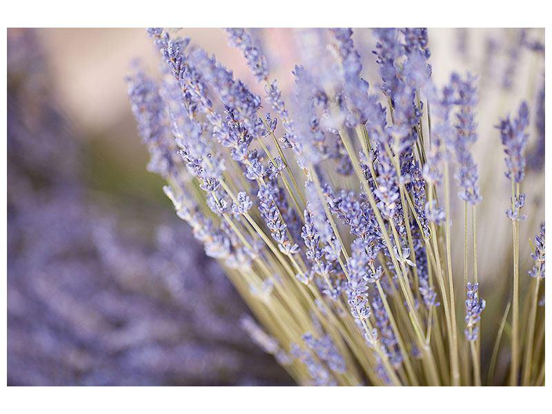 Metallic-Bild Lavendel XXL