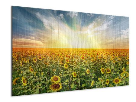 Metallic-Bild Ein Feld voller Sonnenblumen