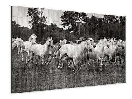 Metallic-Bild Die Mustang Herde