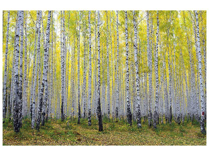 Metallic-Bild Herbstlicher Birkenwald
