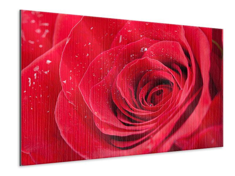 Metallic-Bild Rote Rose im Morgentau