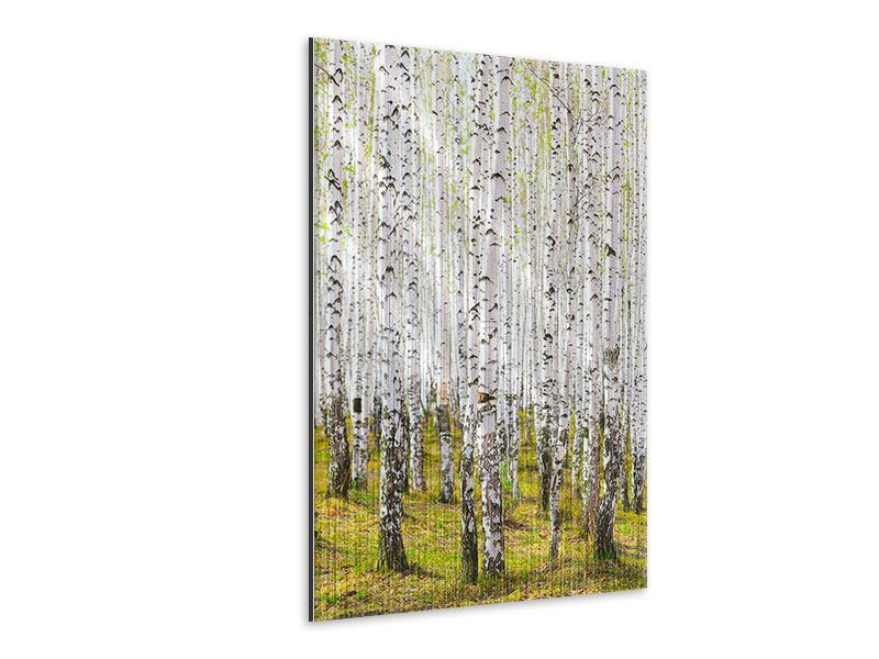 Metallic-Bild Der Birkenwald im Frühling