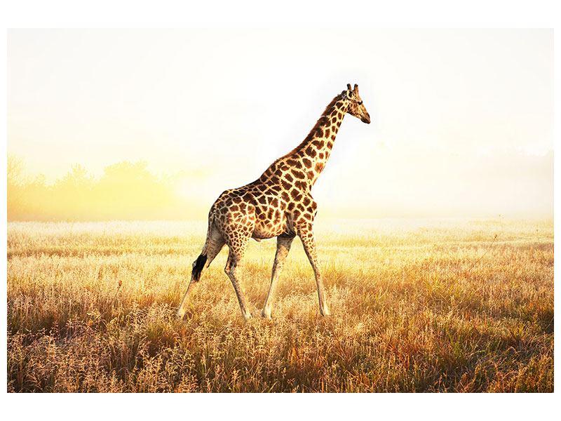 Metallic-Bild Die Giraffe