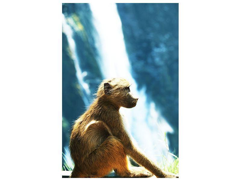 Metallic-Bild Der Primat