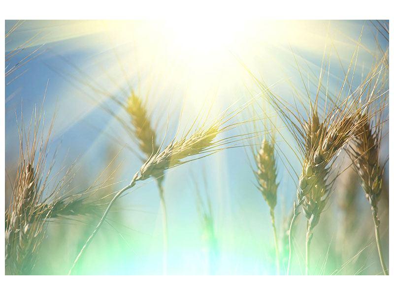 Metallic-Bild König des Getreides