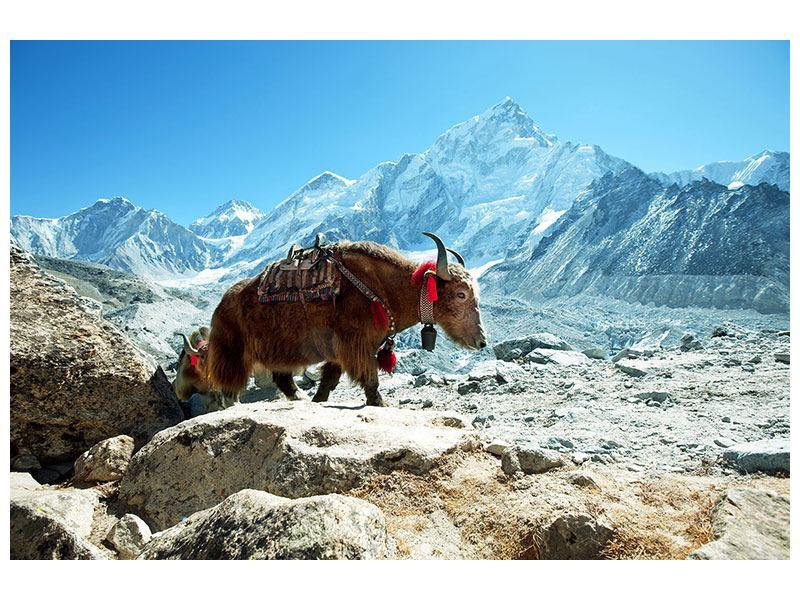 Metallic-Bild Das Himalaya-Gebirge