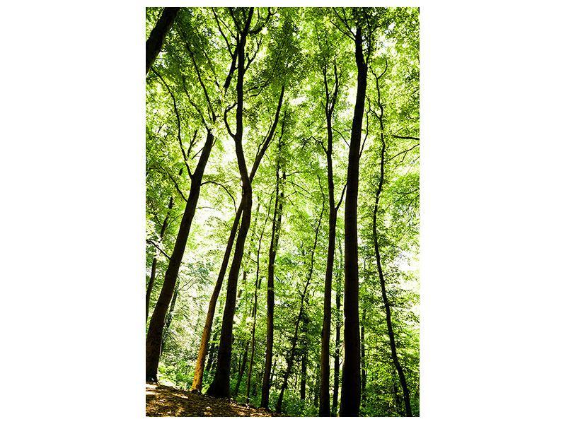 Metallic-Bild Wald
