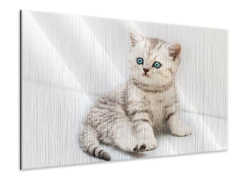 Metallic-Bild Katzenbaby