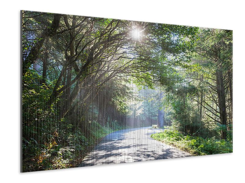 Metallic-Bild Sonniger Waldweg