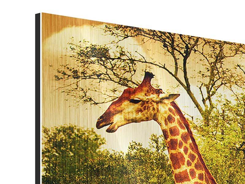 Metallic-Bild Südafrikanische Giraffen