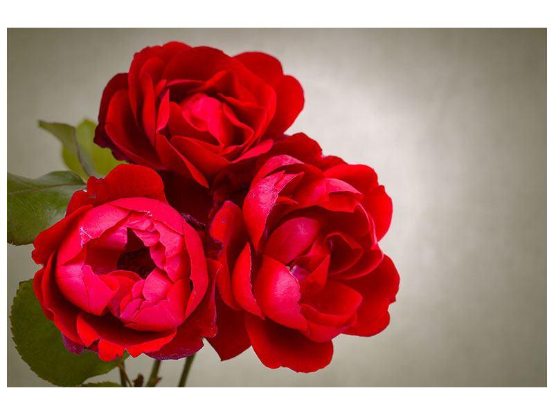 Metallic-Bild Drei rote Rosen