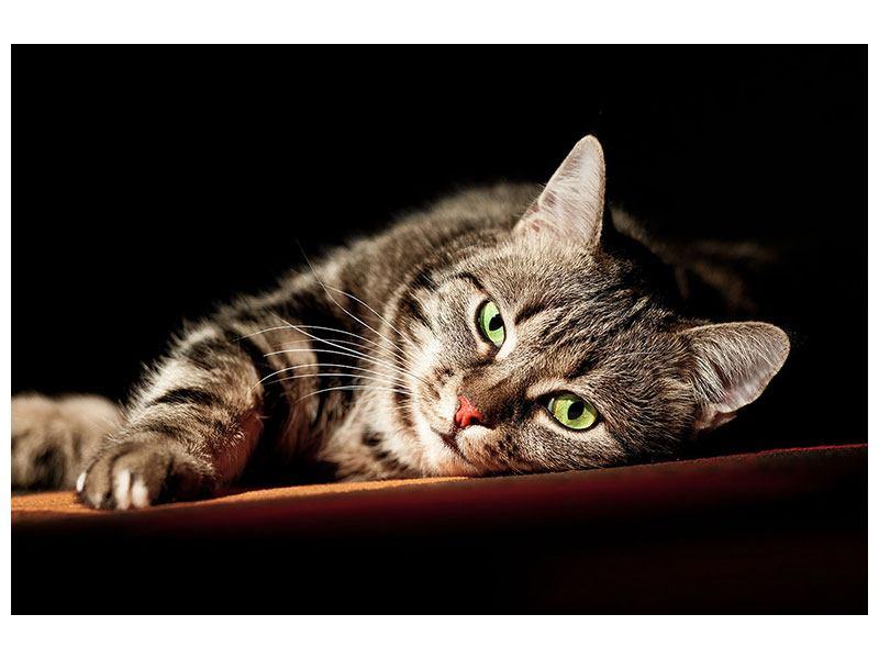Metallic-Bild Entspannte Katze