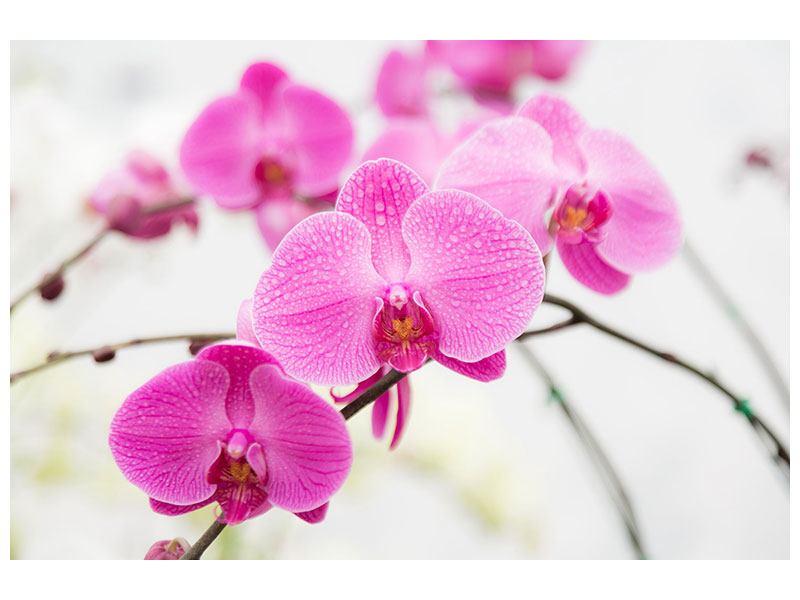 Metallic-Bild Das Symbol der Orchidee