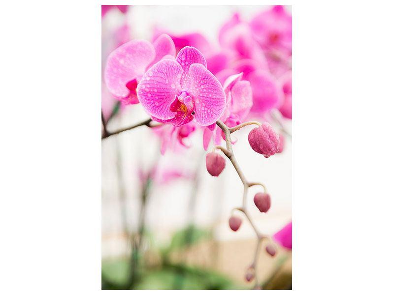 Metallic-Bild Gestreifte Orchideenblüten in Rosa