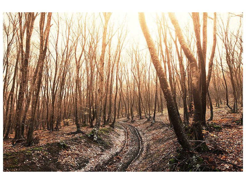 Metallic-Bild Der kahle Wald