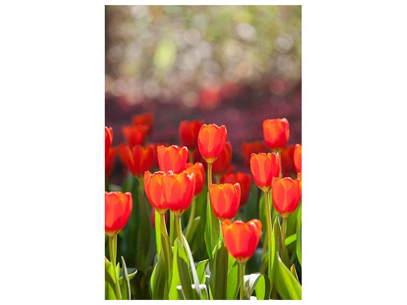 Metallic-Bild Das rote Tulpenbeet